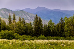 Rand van de bos en purpere bergen in de afstand Royalty-vrije Stock Afbeeldingen