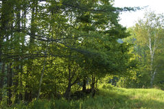 Rand van het Bos stock fotografie