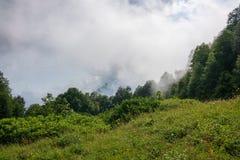 Rand van het groene bos in de wolken en de dichte mist royalty-vrije stock foto