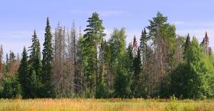 Rand van het groene bos met dode bomen Stock Afbeeldingen