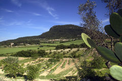 Randa Valley, Majorca, Spain. Beautiful valley with mountain in background, Majorca, Spain Stock Photos