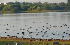 Randarda湖,拉杰科特 免版税图库摄影