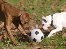 Randello di gioco del calcio Fotografie Stock