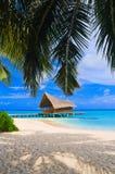 Randello di immersione subacquea su un'isola tropicale Fotografia Stock Libera da Diritti