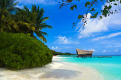Randello di immersione subacquea su un'isola tropicale Fotografia Stock