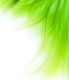 Randhintergrund des grünen Grases Lizenzfreie Stockfotos