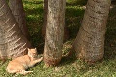 Randig brun katt som solbadar under några palmträd i en trädgård royaltyfri fotografi