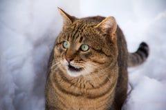 Randig fet katt för vinter Arkivbilder