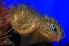 Randig fisk Royaltyfri Fotografi