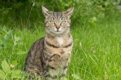 Randig katt 3 Arkivfoto