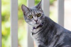 Randig katt för grå färger på balkong arkivbild