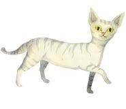Randig katt för vit Arkivfoto