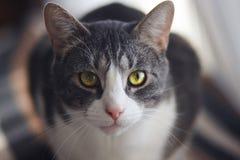 Randig katt med en charmig magisk blick royaltyfri bild