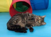 Randig katt som ligger bredvid leksaktunnelen på blått Arkivfoton