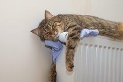 Randig katt som ligger på batteriet arkivfoto