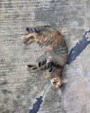 Randig kattsömn på en sida för ` s royaltyfria bilder