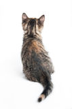 Randig kattunge arkivbild