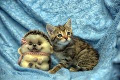 Randig kattunge- och leksakigelkott royaltyfri bild