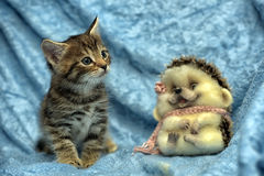 Randig kattunge- och leksakigelkott royaltyfria foton