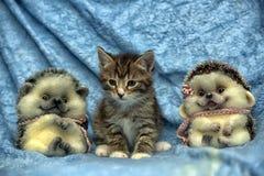 Randig kattunge- och leksakigelkott royaltyfria bilder
