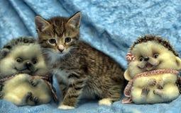 Randig kattunge- och leksakigelkott arkivbilder