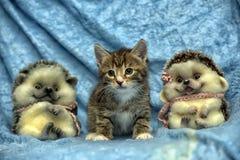 Randig kattunge- och leksakigelkott arkivfoton