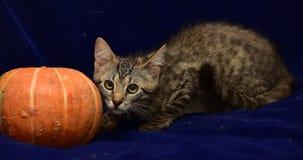 randig kattunge och pumpa Fotografering för Bildbyråer
