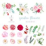 Randig, krämig och burgundy röd dahlia, rosa ranunculus, ros, vektor illustrationer