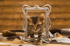 Randig ljust rödbrun kattunge som spelar mot bakgrunden av ramen arkivbilder