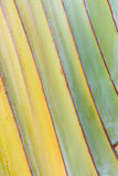 Randig naturlig bakgrund - abstrakt naturmodell Royaltyfria Bilder