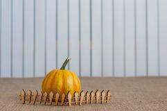 Randig pumpa bak leksakträstaketet _ Royaltyfria Bilder