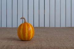 Randig pumpa för apelsin på vit träbackgraund Royaltyfri Bild