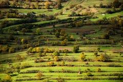 Randiga gräs- kullar Royaltyfri Fotografi