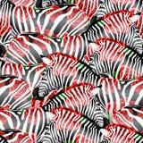 Randigt svartvitt för sebra med röda rosor Arkivbilder