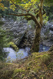 Randolph`s Leap on the Findhorn Gorge. Stock Image