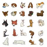 Random animal collection Stock Image
