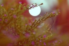 Nature. Random click light garden Flowers royalty free stock images