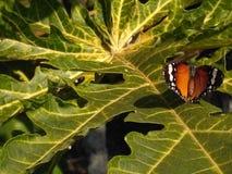 Random clicks. Butterfly Looking happy in my garden Stock Photo