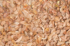 Random dry leaf on ground. Random dry leaf in brown color on ground Stock Image
