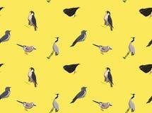 Random European Birds Wallpaper  Royalty Free Stock Image