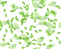 Random leaf pattern Royalty Free Stock Photography