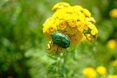 Ship and pigeonsgreen beetle in the sun stock photos