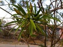 Bokeh plant Royalty Free Stock Image