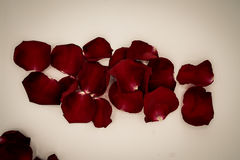 Random rose petals against white background. Great for presentat royalty free stock images