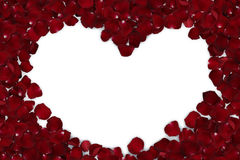 Random rose petals against white background. Great for presentat royalty free stock photography