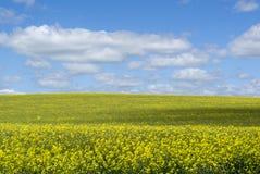 Random Rural Field, Barossa Valley, South Australia Royalty Free Stock Photography
