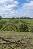 Random Vineyard, Adelaide Hills, SA - Portrait Orientation. Random vineyards near Echunga, South Australia showing off it`s vast rows of grape vines stock image