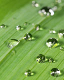 Random water droplets Stock Image
