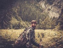 Randonneur d'homme marchant dans la forêt de montagne Photographie stock