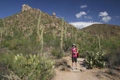 Randonneur dans le désert - parc national de Saguaro, Arizona Images libres de droits